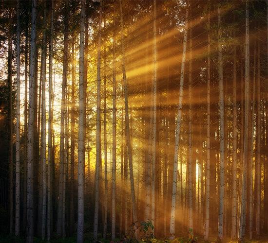 the ritual of light