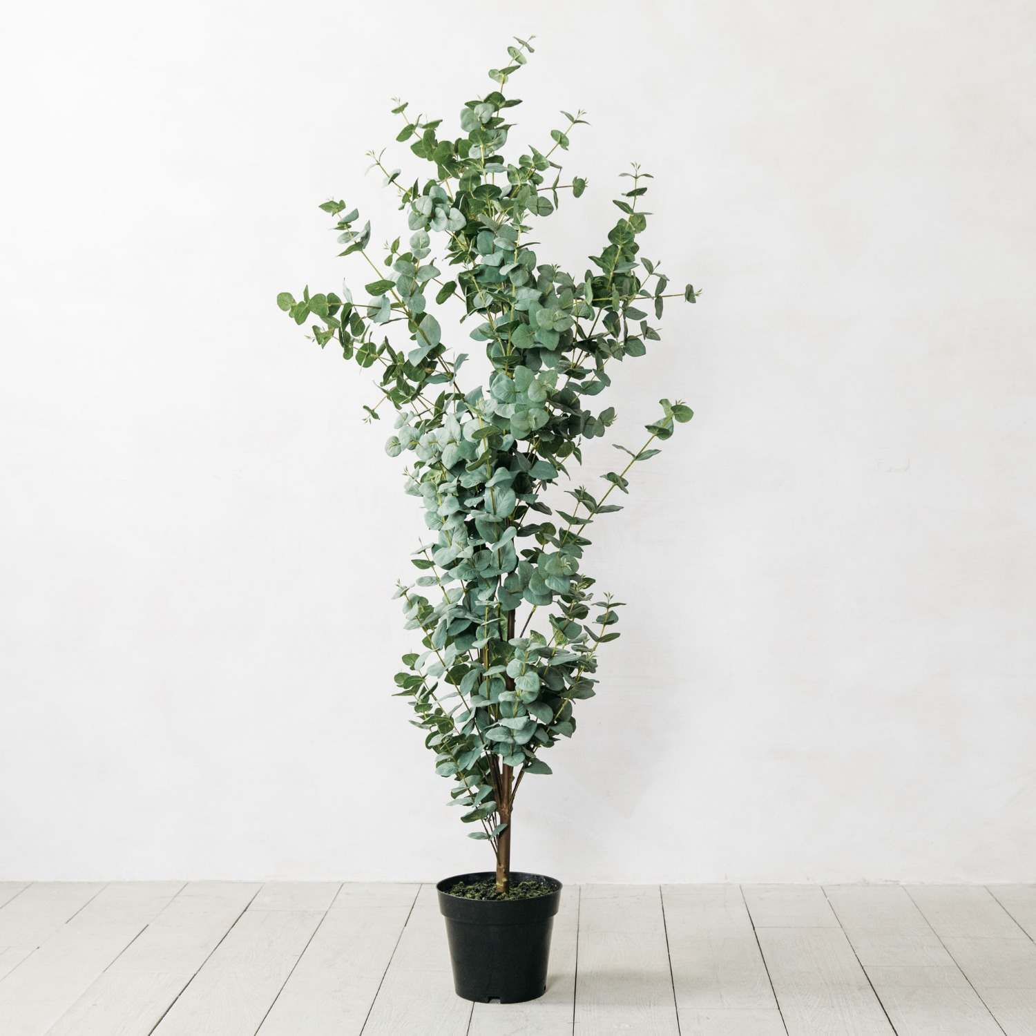 Faux Potted Eucalyptus Tree Graham Green