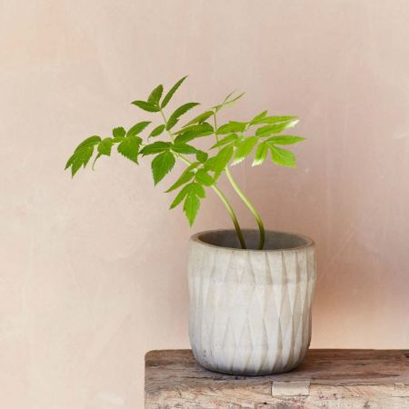 Diamond Concrete Pot