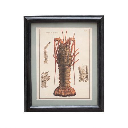 Lobster Framed Wall Print