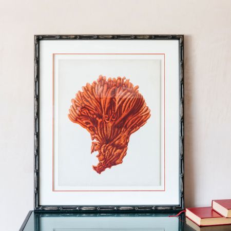 Framed Orange Coral Print