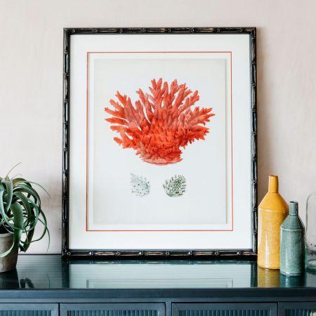 Framed Red Coral Print