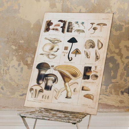 Framed Lactarius Mushroom Print