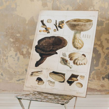 Framed Boletus Mushroom Print