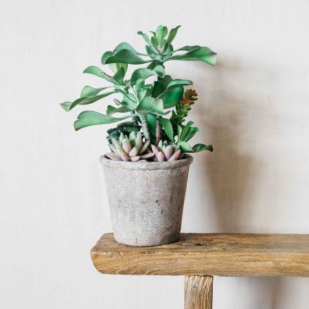 Assorted Cacti in Pot