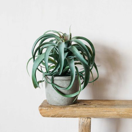 Faux Tillandsia Plant in Pot