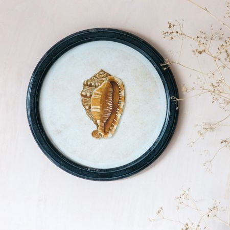 Round Framed Conch Shell Print