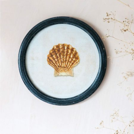 Round Framed Scallop Shell Print