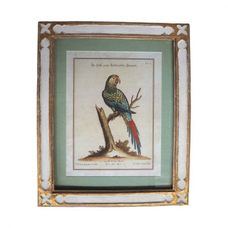 Framed Green Parrot Print