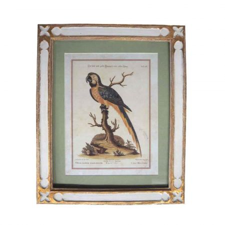 Framed Blue and Yellow Parrot Print