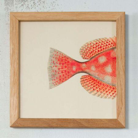 Framed Orange Fish Fin Print