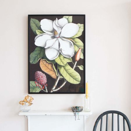 Small Framed Blooming Magnolia Print