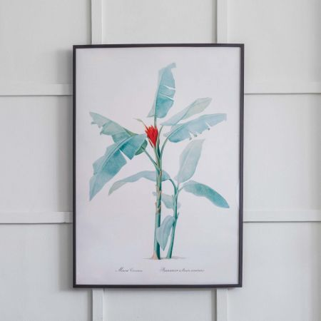 Large Framed Scarlet Banana Print