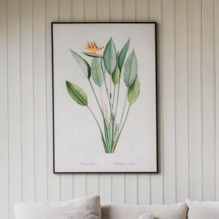 Large Framed Crane Flower Print