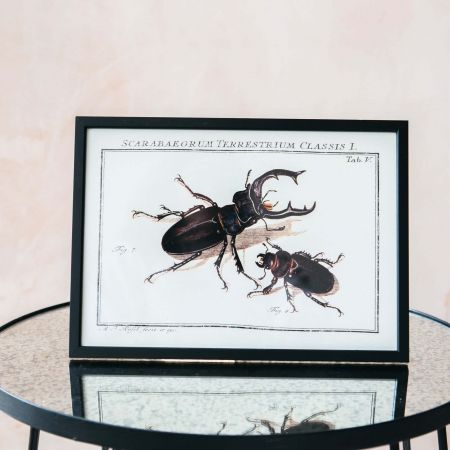 Small Framed Two Bugs Print