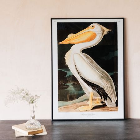 Medium Framed White Pelican Print