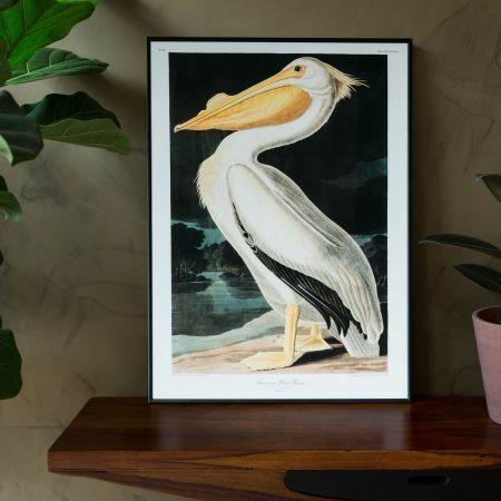 Medium Framed White Pelican Print
