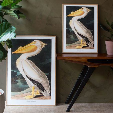 Framed White Pelican Prints