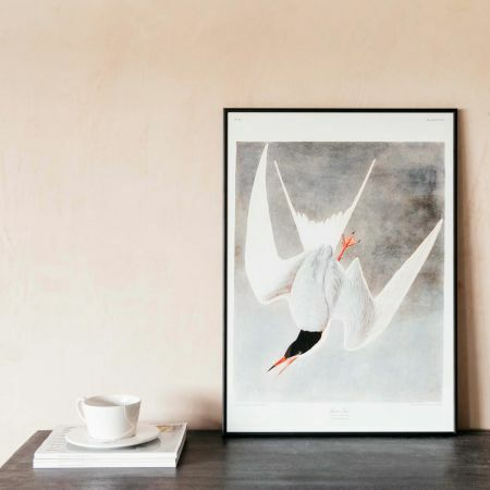 Framed Great Tern Prints