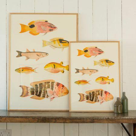 Framed Six Fish Prints