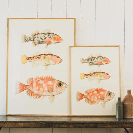 Framed Three Fish Prints