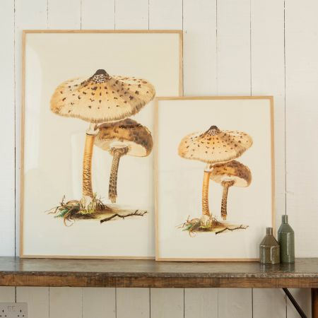 Framed Fungi Prints