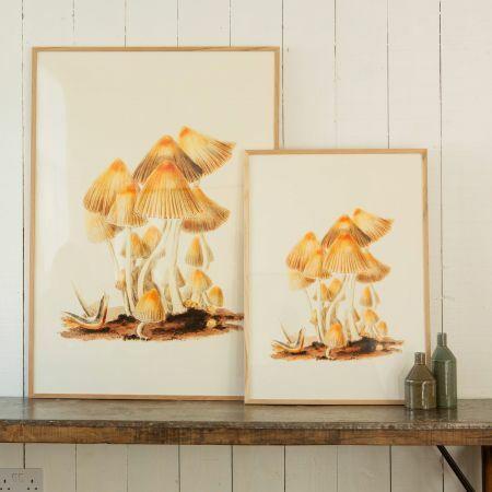 Framed Mushroom Prints