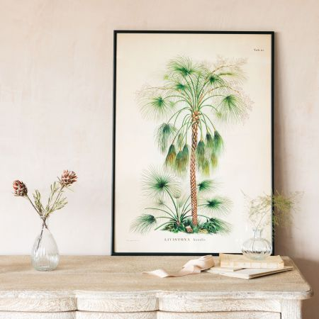 Medium Framed Exotic Palm Print