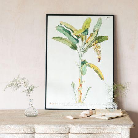 Framed Banana Plant Prints