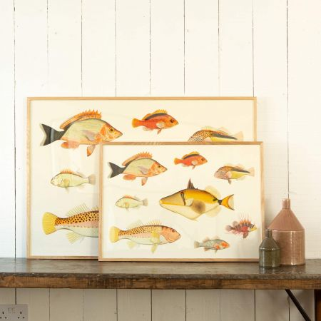 Framed Eight Fish Prints