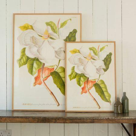 Framed White Magnolia Prints