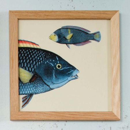 Framed Blue Fish Head Print