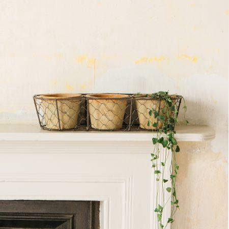 Set of Three Terracotta Pots in Basket