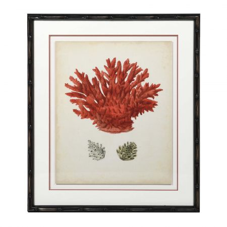 Framed Red Coral Print