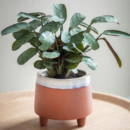 Halston Large Terracotta Pot