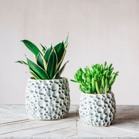 Grey Shell Plant Pots