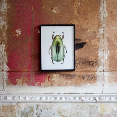 Small Wooden Framed Insect Print - Chrysina Strasseni