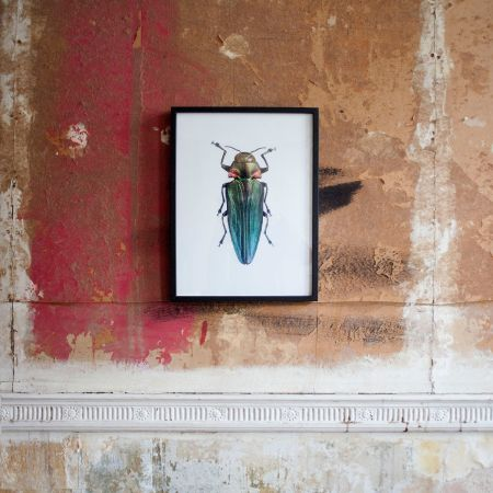 Small Wooden Framed Insect Print - Belionota Prasina