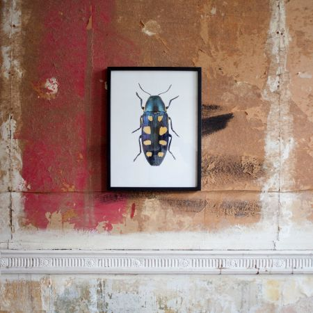 Small Wooden Framed Insect Print - Buprestis Octoguttata