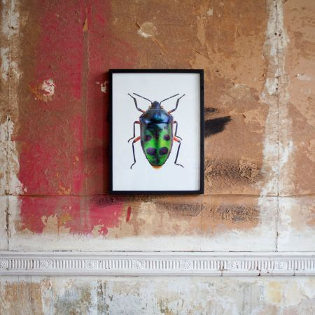 Small Wooden Framed Insect Print - Chrysocoris Stolli