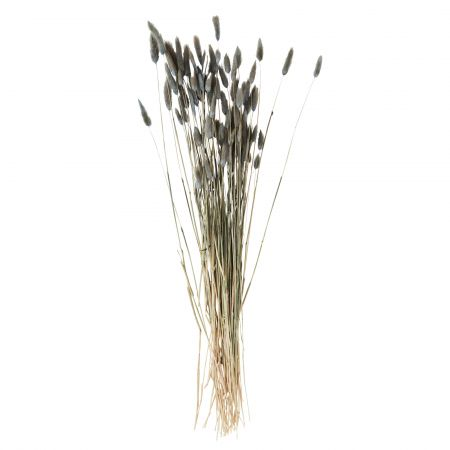 Dried Grey Hare's Tail Grass