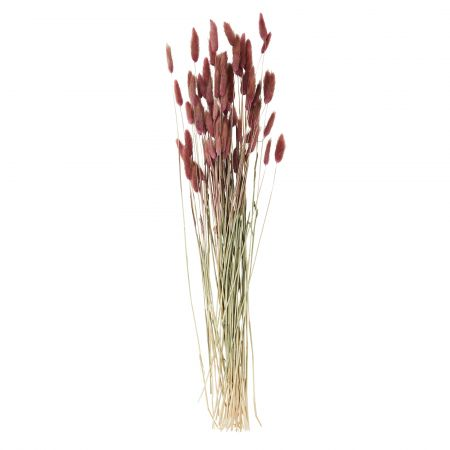 Dried Purple Hare's Tail Grass