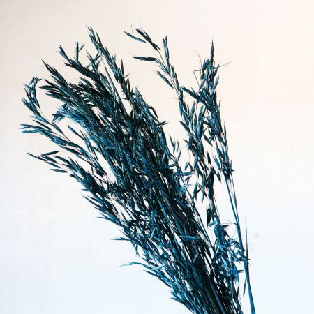 Dried Black Wheat Grass