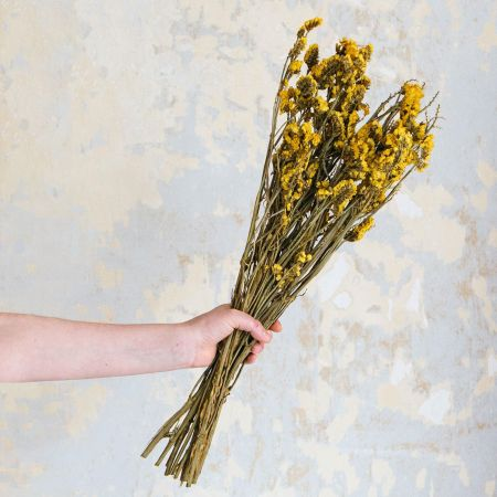 Dried Yellow Forget-Me-Not Bunch