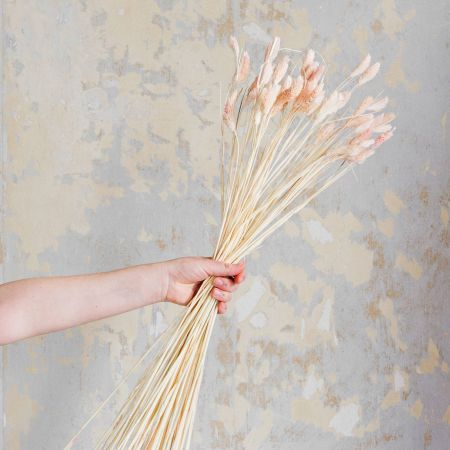 Dried Pink Reed Grass Bunch