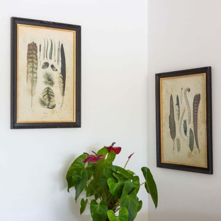 Set of Two Framed Feather Prints