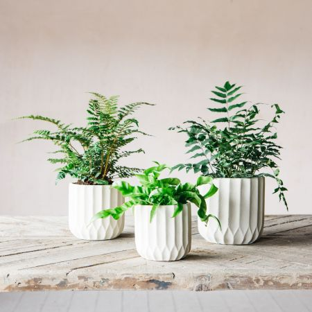 Ivory Ribbed Cement Planters