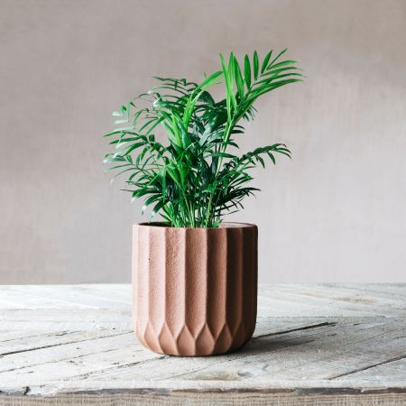 Large Brown Ribbed Cement Planter