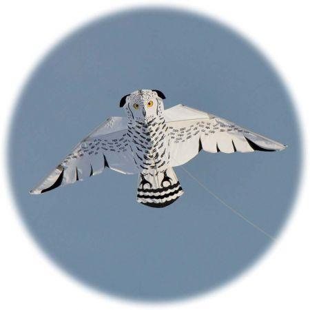 Snowy Owl Kite - Thumbnail