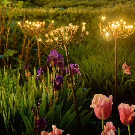 Wild Fennel Light